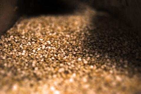 Qué es la Quinoa?